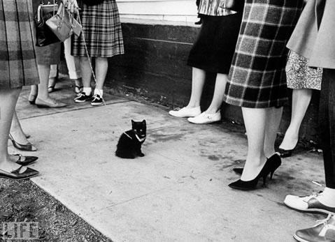 kara-kedi-ugursuzluk.felsefehayat
